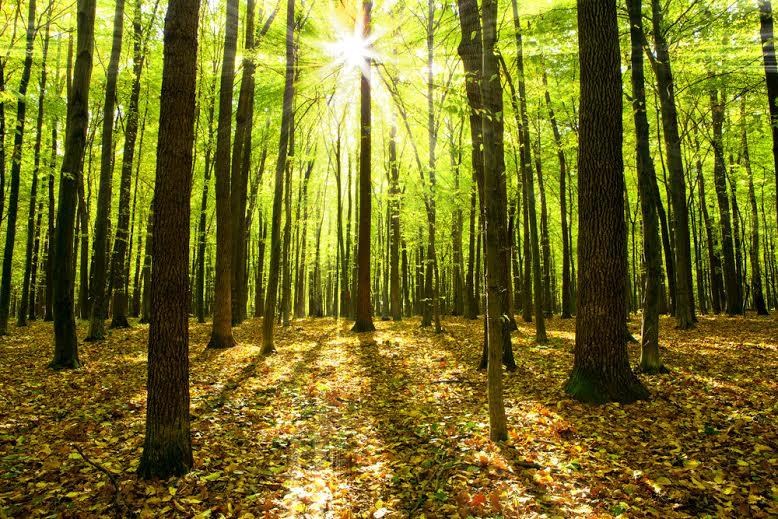VivaSlack - Guia do Slackline: como escolher as melhores árvores para prender as fitas?